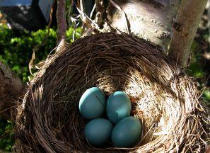 zfdc-eggsnest:IMG_0351
