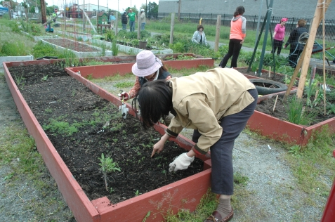 Plots are cultivated by individuals and groups.
